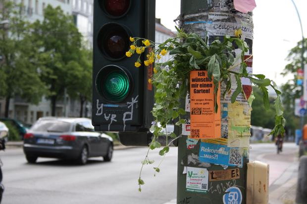 Grün in der Großstadt: Begrünt Berlin! // HIMBEER