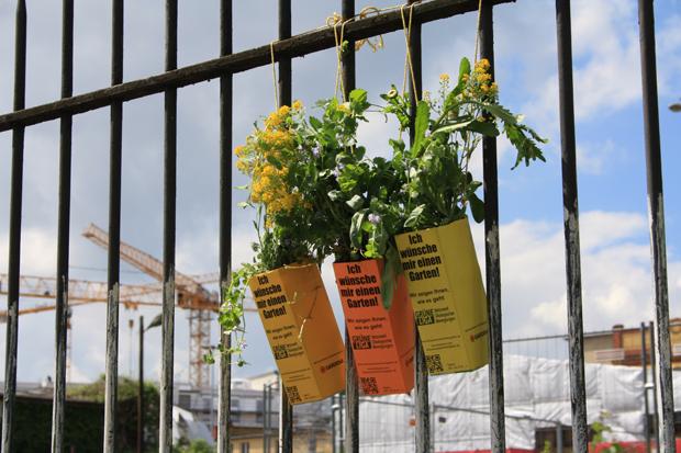 Pflanzen an die Bauzäune // HIMBEER