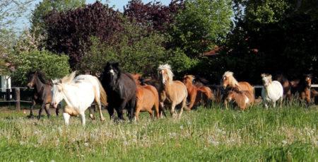 Ponyhof Neuholland // HIMBEER