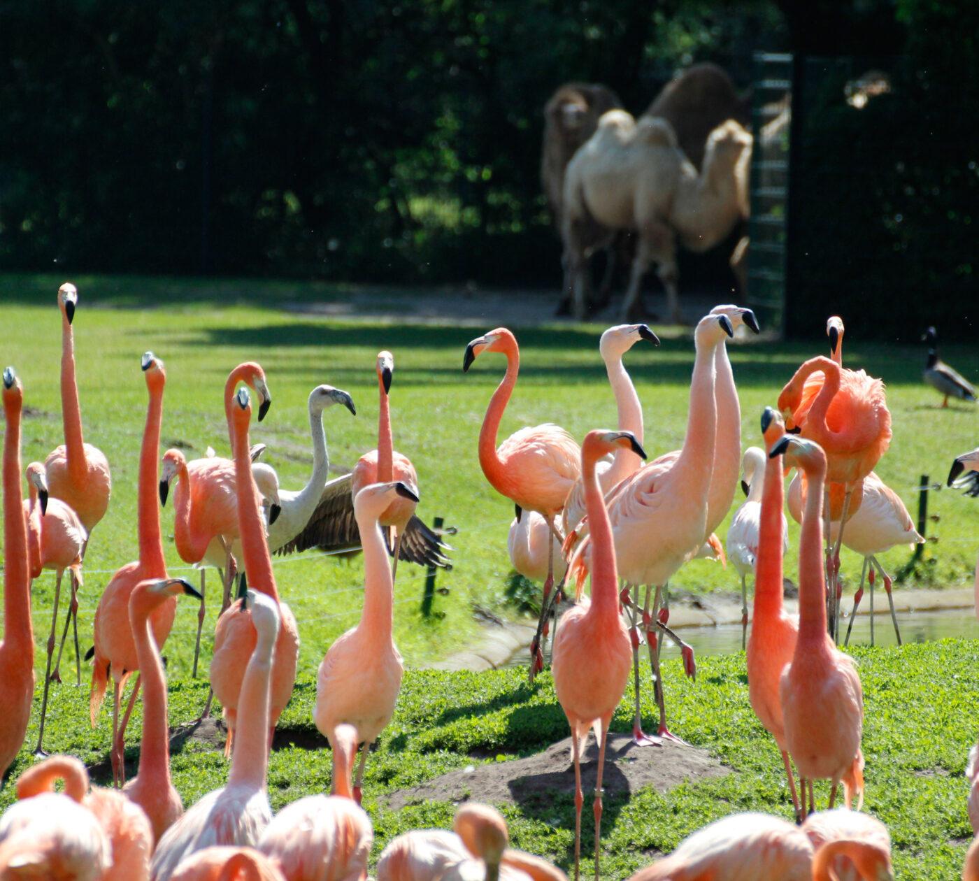 Ausflugstipps zum  Muttertag: Flamingowiese im Tierpark Berlin // HIMBEER