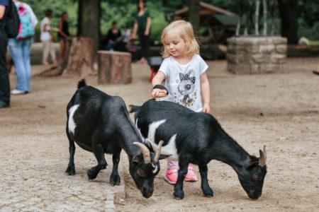 Streichelzoo Tierpark Berlin