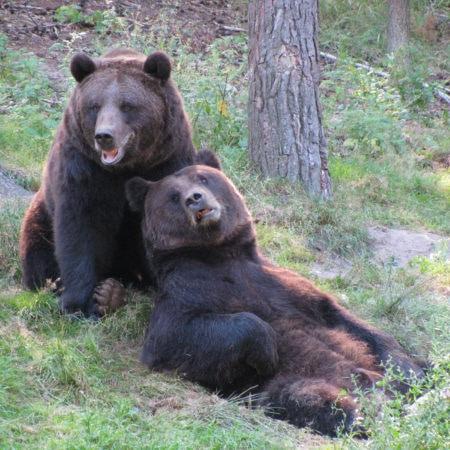 Familien-Ausflugstipps mit Übernachtung: Wildpark MV // HIMBEER
