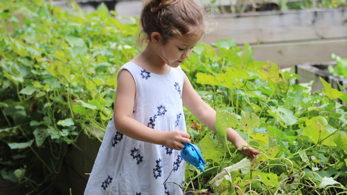 Buchtipps: Balkon und Garten – Tipps zum Gärtnern und Selbstversorger // HIMBEER