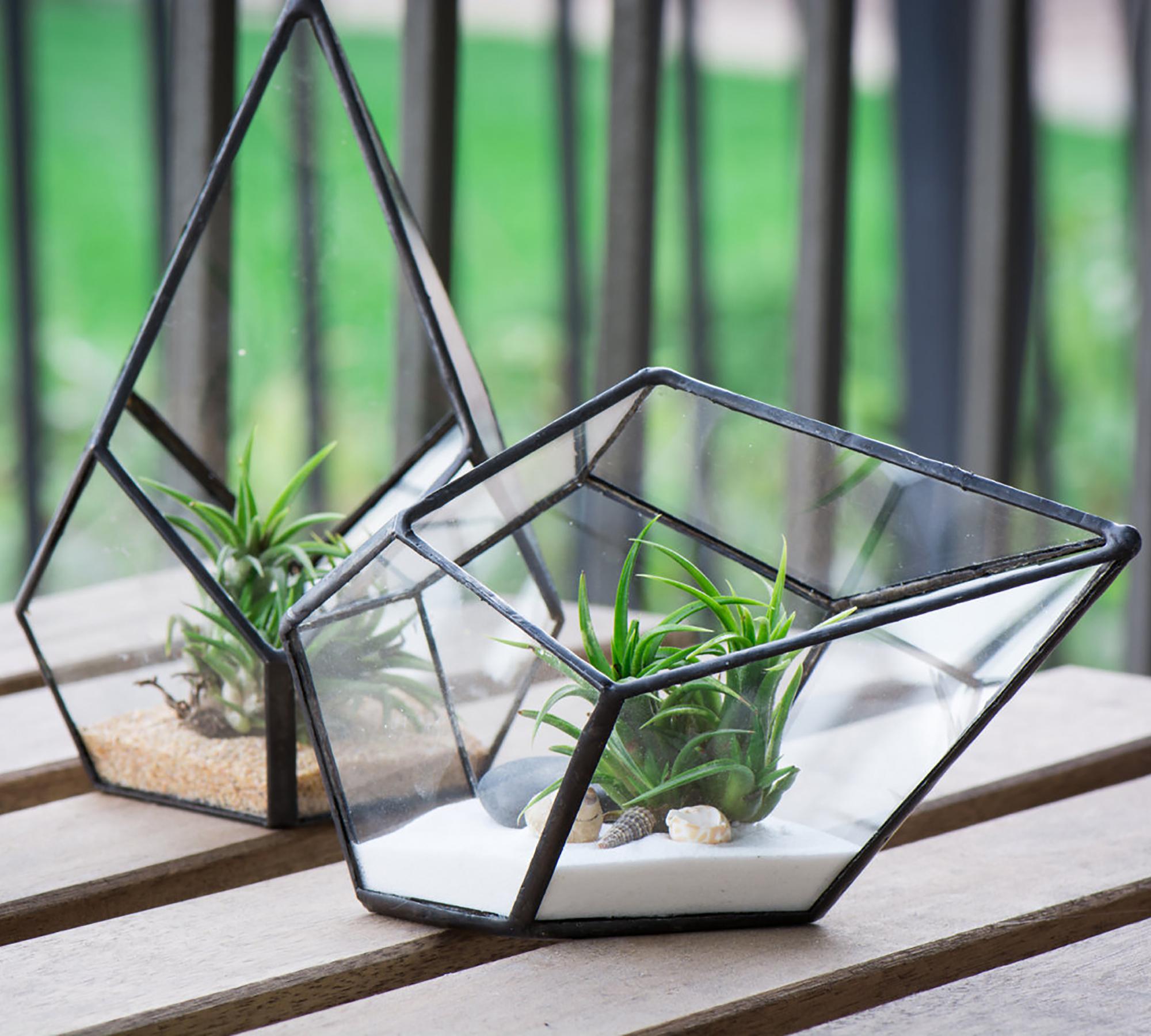 Glasterrarium | HIMBEER Magazin
