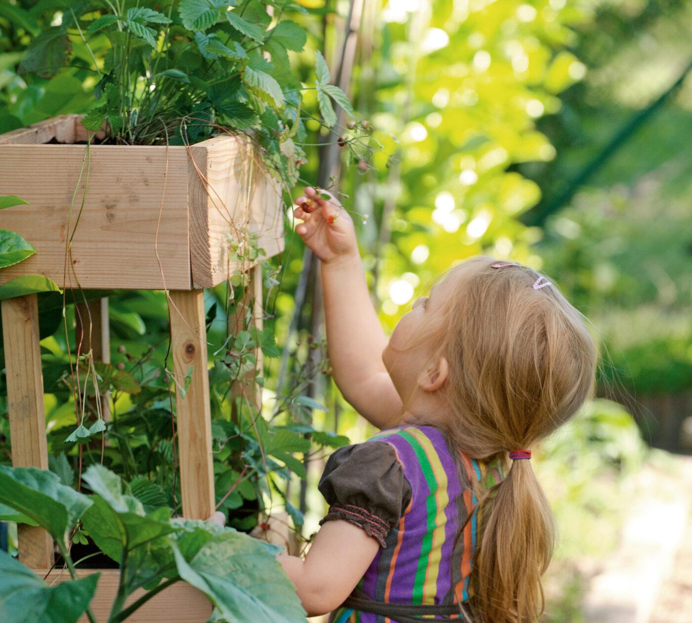 Mit Kindern gärtnern – Bauanleitungen und Gartentipps // HIMBEER