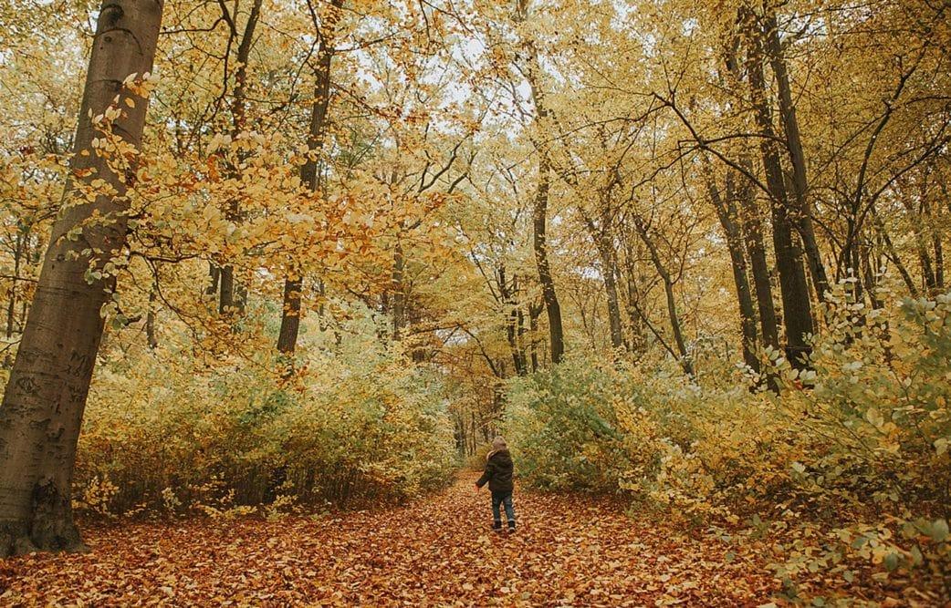 Herbst Bilder Kinder
