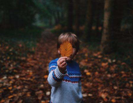 Herbstferien in der Natur mit Ferienkursen für Kinder in Berlin 2019 c Annie Spratt// HIMBEER