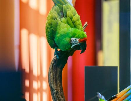 Ara im Naturkundemuseums | BERLIN MIT KIND