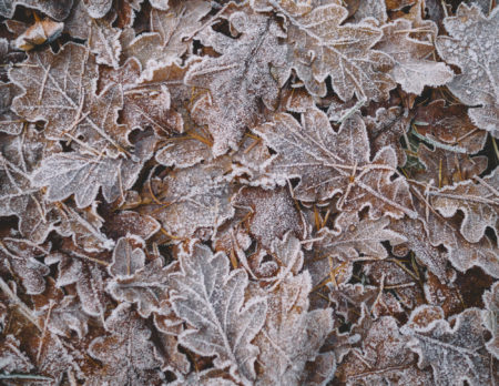 Vereiste Blätter