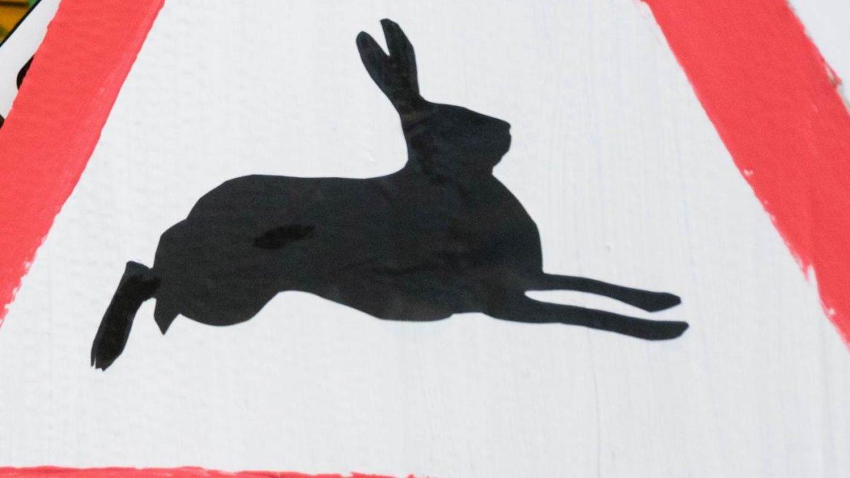 Achtung Hasen | berklinmitkind.de