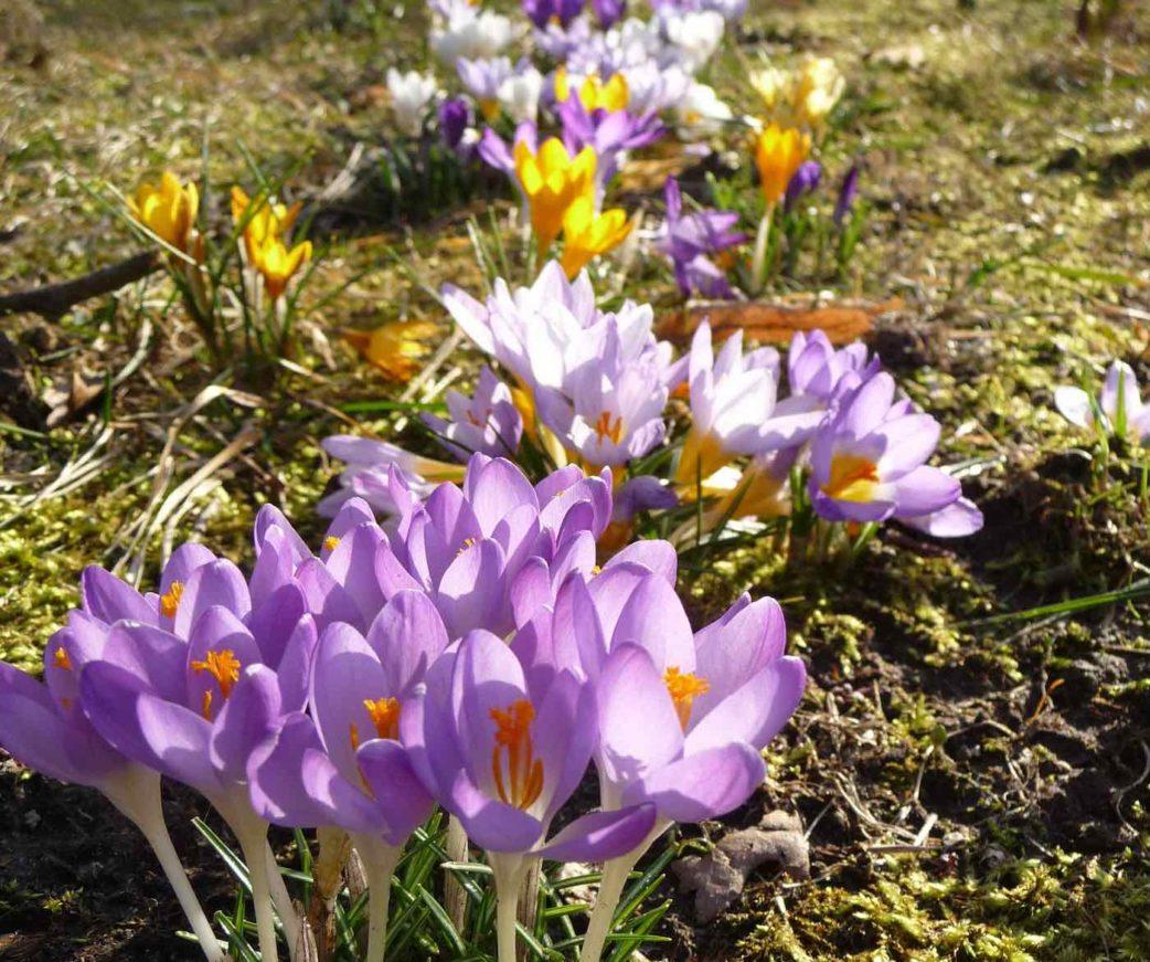 Die ersten Blumen auf dem Vierfelderhof | berlinmitkind.de