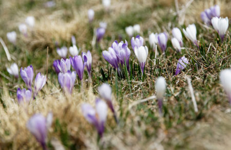 Frühling, Wochenende, berlinmitkind.de