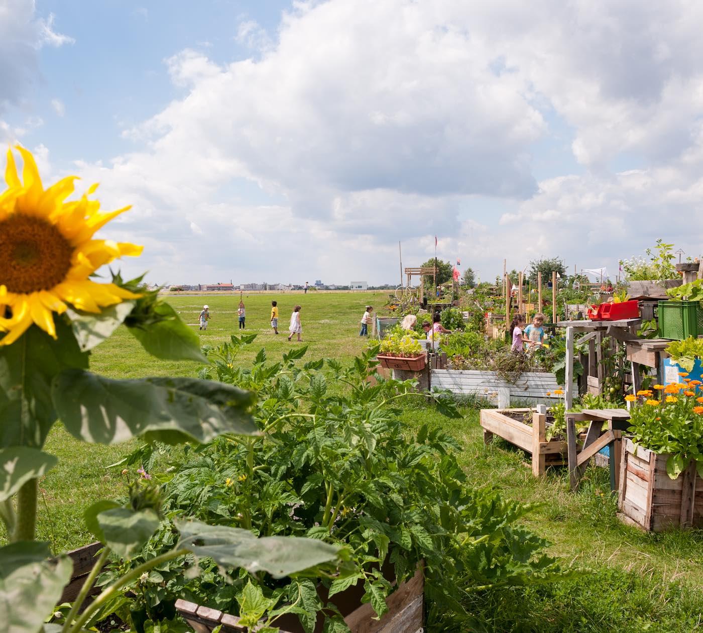 Gemeinschaftsgarten auf dem Tempelhofer Feld | berlinmitkind.de