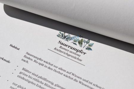 Sauerampfer im Kräuterskript von Anne's Kräuter | berlinmitkind.de