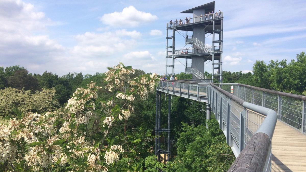 Ausflugstipp nach Beelitz-Heilstätten | Berlin mit Kind