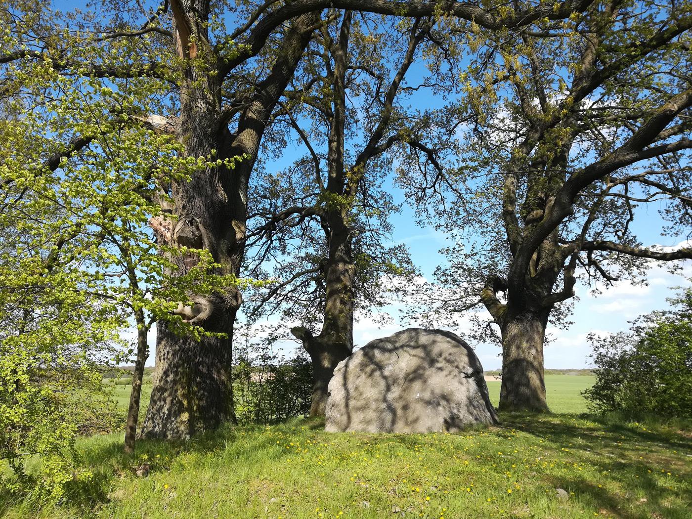 Natur und Entspannung Bäume und Felsen