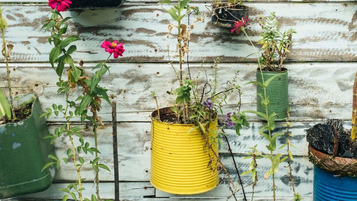 Bepflanzte Dosen | Berlin mit Kind