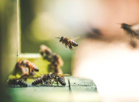 Bienen beim Anflug in den Stock | Berlin mit Kind