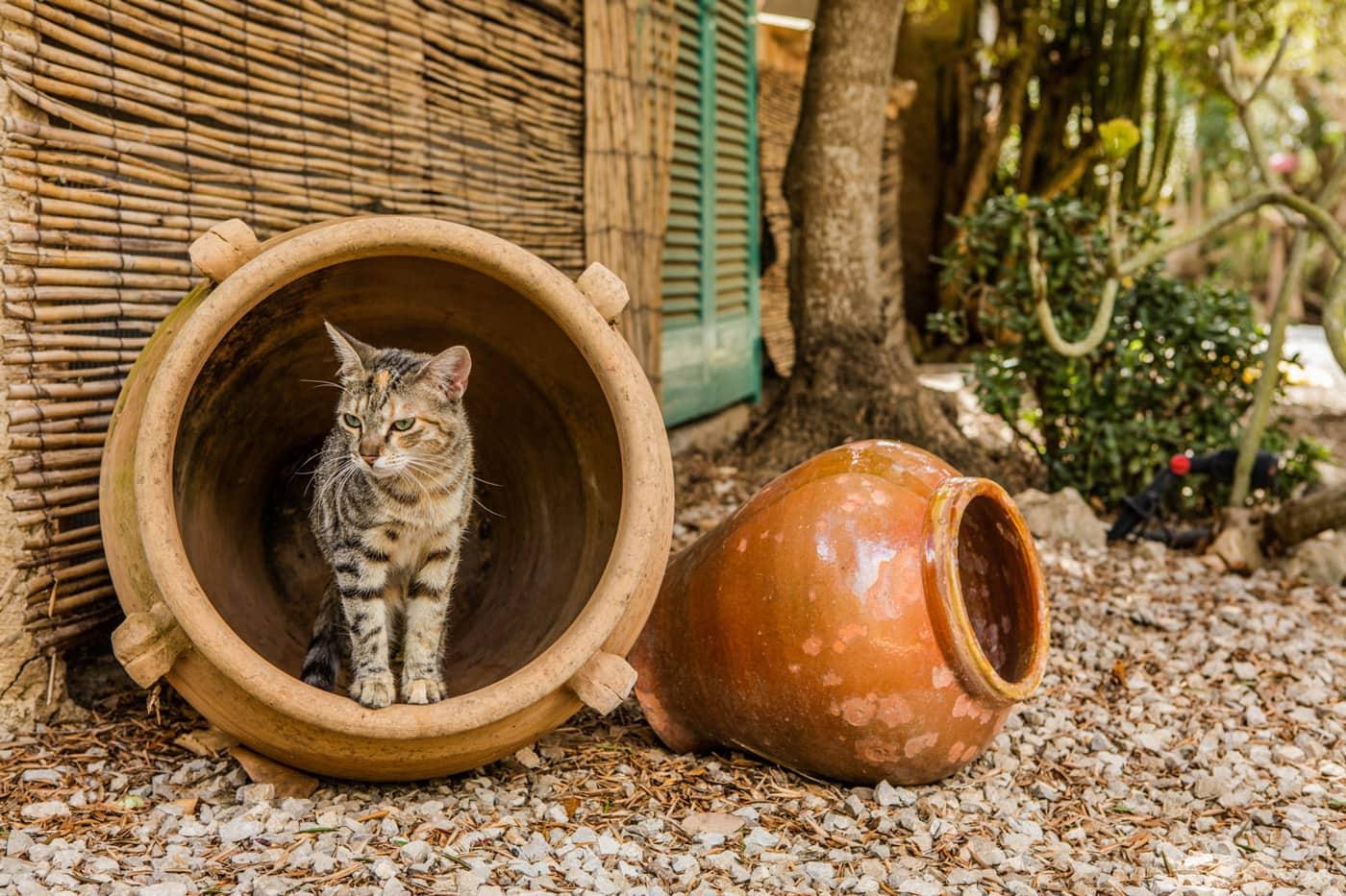 Katze im Tonkrug