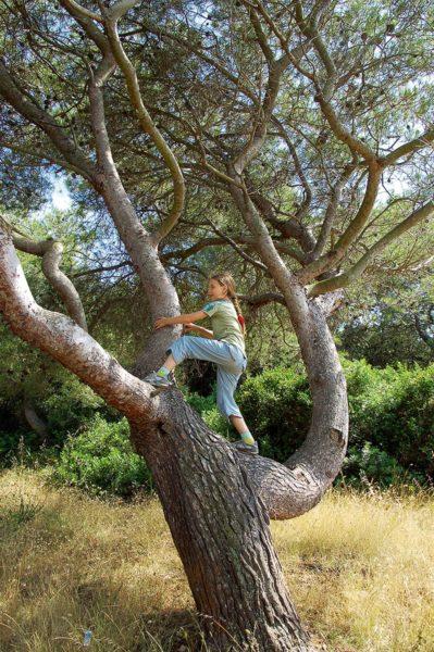 Kind klettert auf Baum auf Sardinien | München mit Kind