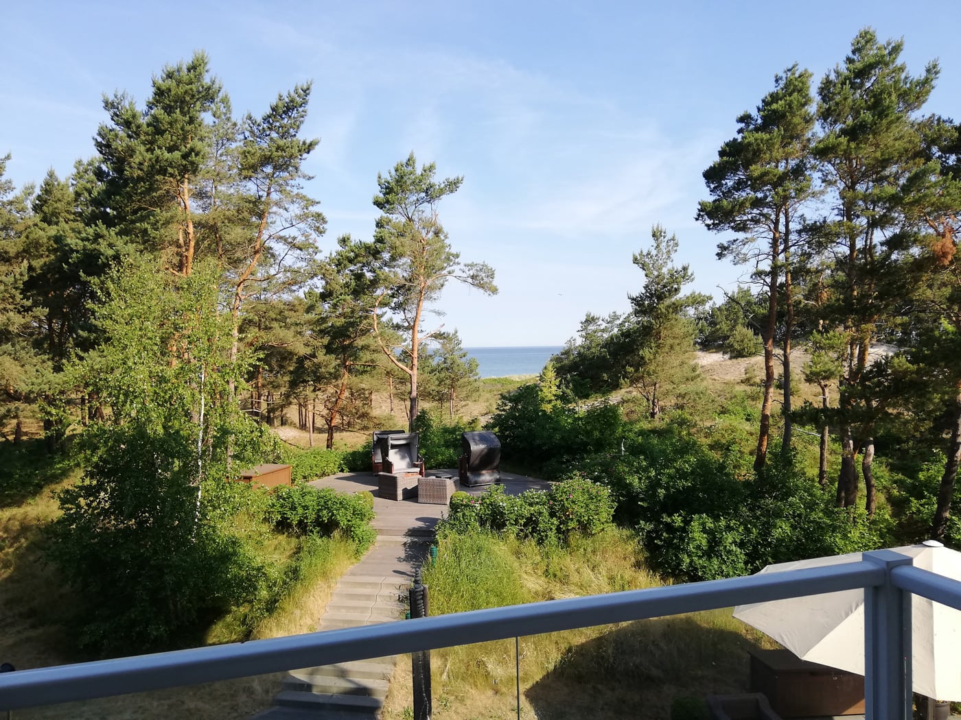 Blick durch die Kiefern aufs Meer Urlaub auf dem Darß