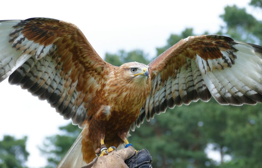 Ausflug nach Brandenburg mit Kindern: Greifvögel im Wildpark Johannismühle // HIMBEER