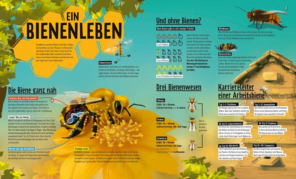 Das Bienenleben Uebersicht aus dem Forscher Magazin