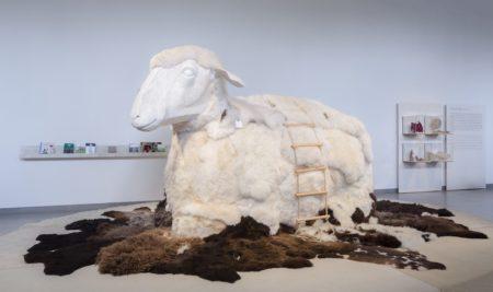 Ein sehr gemütliches Schaf mit viel Fell // HIMBEER