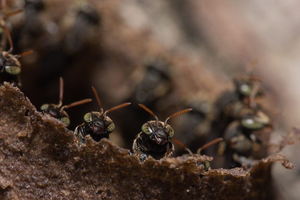 Alles über die Wespe: Wespennest // HIMBEER