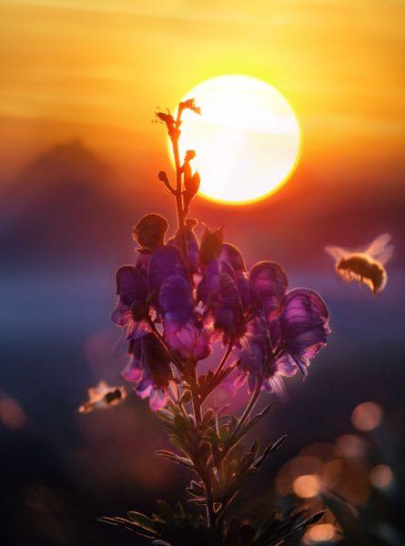 Alles über die Wespe: Im Anflug auf Blüten // HIMBEER