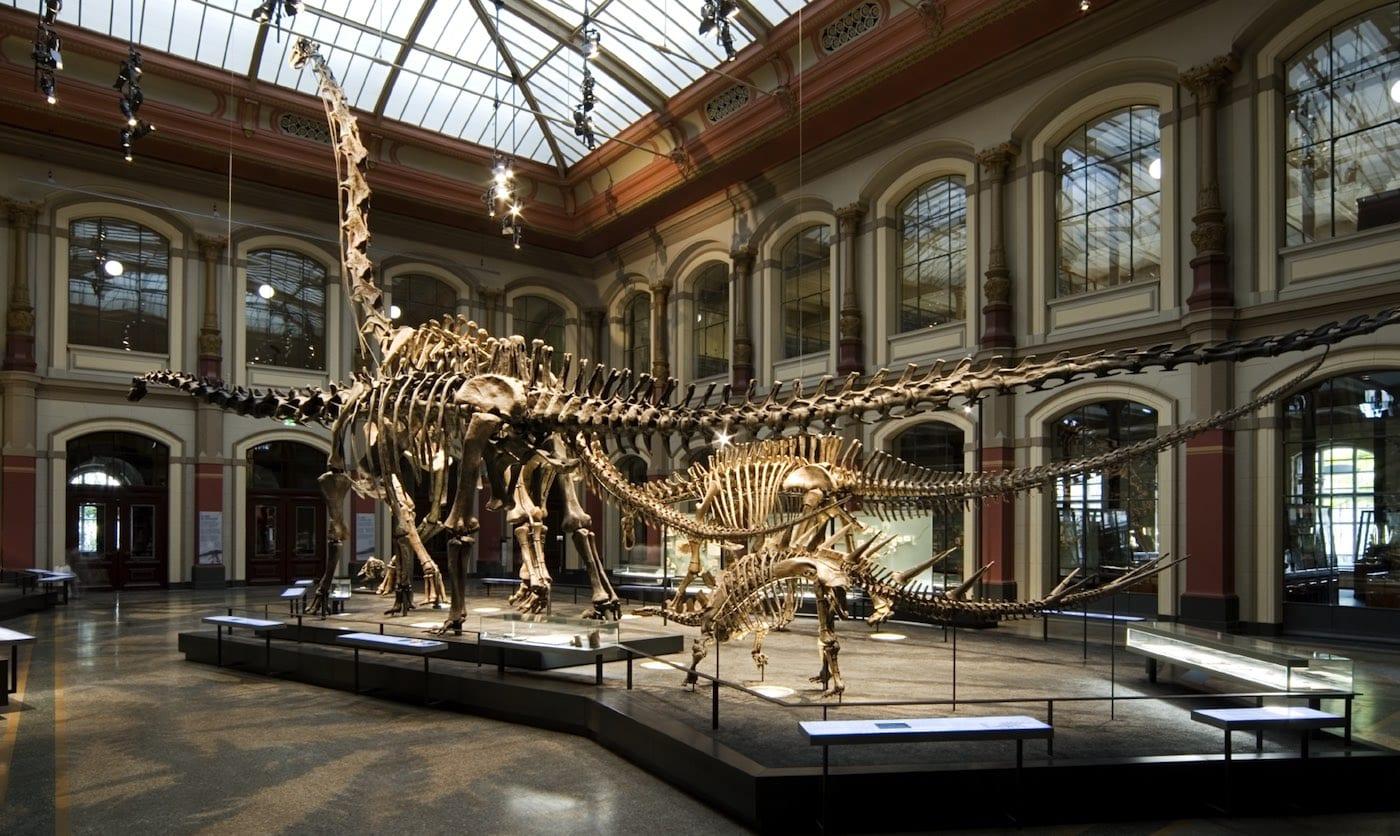 Eintrittspreise Naturkundemuseum Berlin