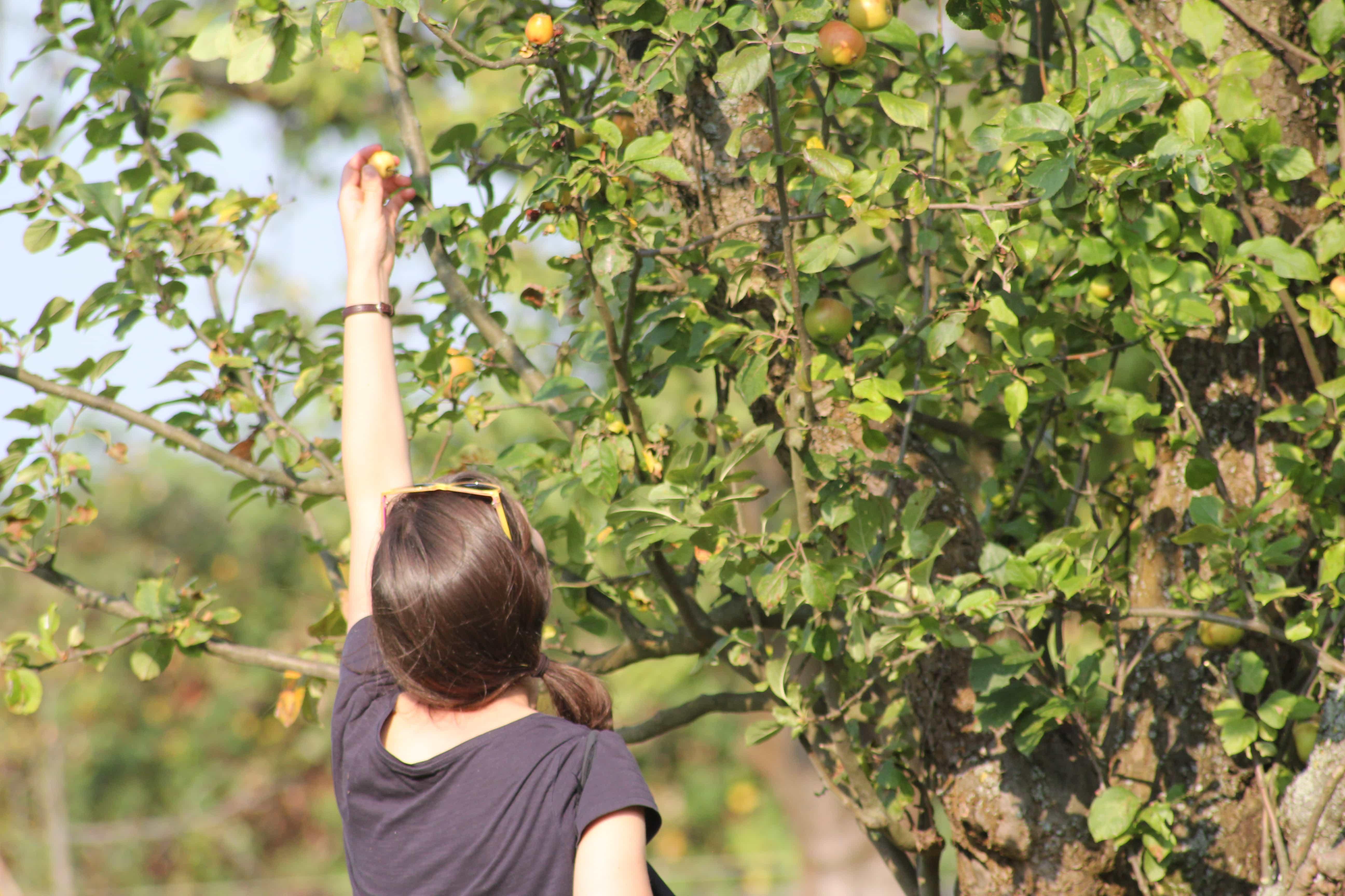 Frau pflückt Apfel vom Baum // HIMBEER