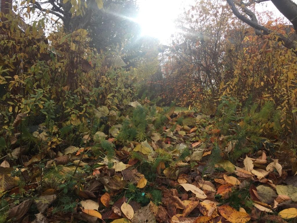 Herbstlandschaft // HIMBEER