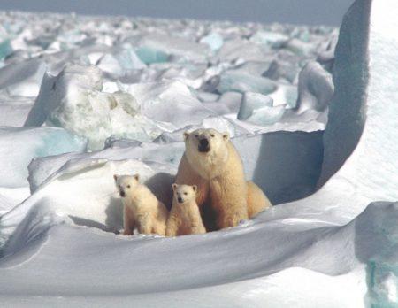 Eisbären mit Kind in Berlin // HIMBEER