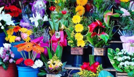 Blumengeschäft frontal Ansicht // HIMBEER