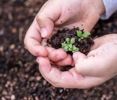 Umweltbildung für Kinder in Berlin // HIMBEER