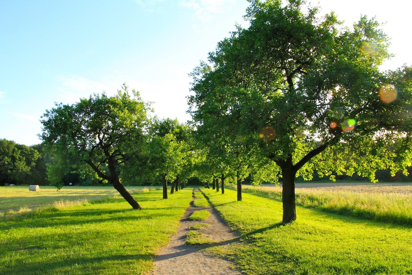 Ferienkurse für Kinder im Botanischen Volkspark Pankow // HIMBEER