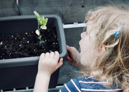 Mit Kindern die Natur der Stadt entdecken // HIMBEER