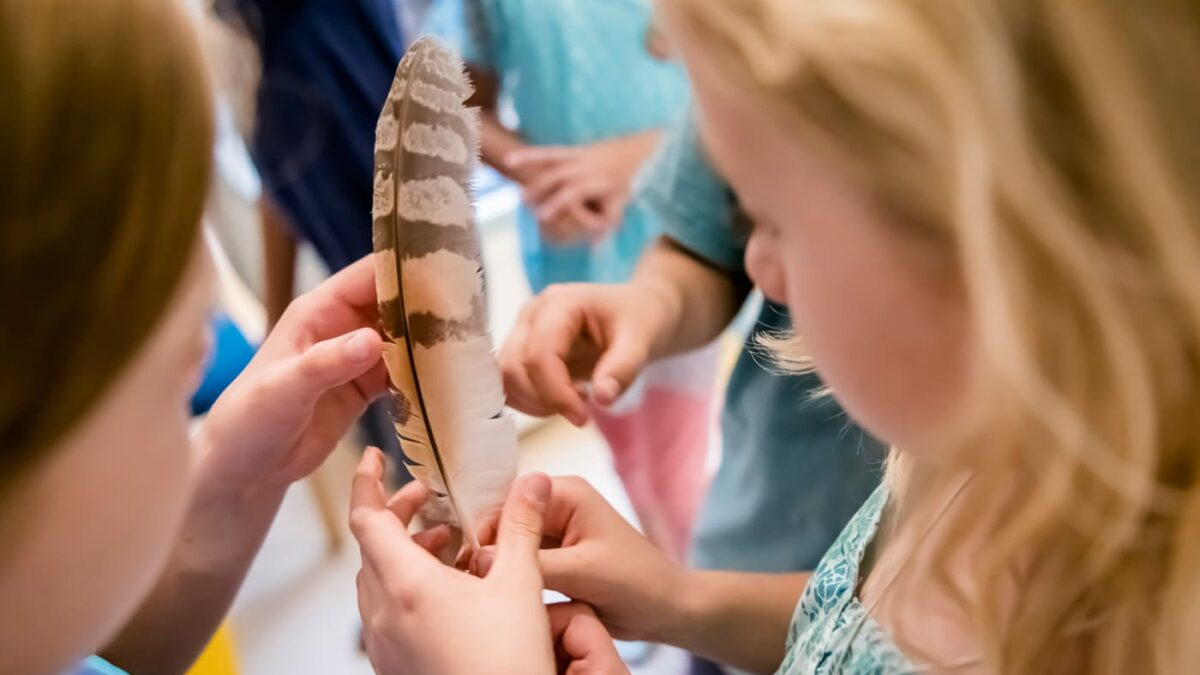 Kindergeburtstag feiern im Naturkundemuseum Potsdam // HIMBEER