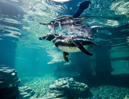 Ozeaneum, Kinder, Ausflüge, Pinguin // HIMBEER