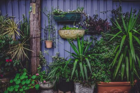 Top Ten Gartencenter // HIMBEER