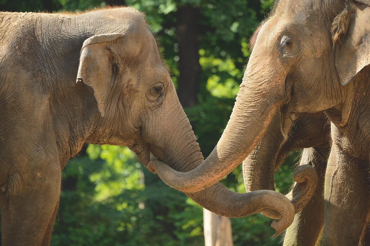 Kinder- und Familienprogramm im Zoo Berlin // HIMBEER