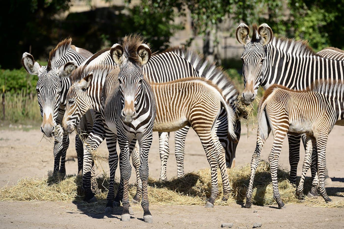 Safari im Tierpark Berlin für Familien mit Kindern in Berlin // HIMBEER