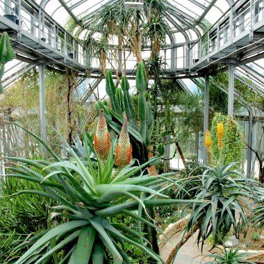 Afrikahaus im Botanischen Garten Berlin // HIMBEER