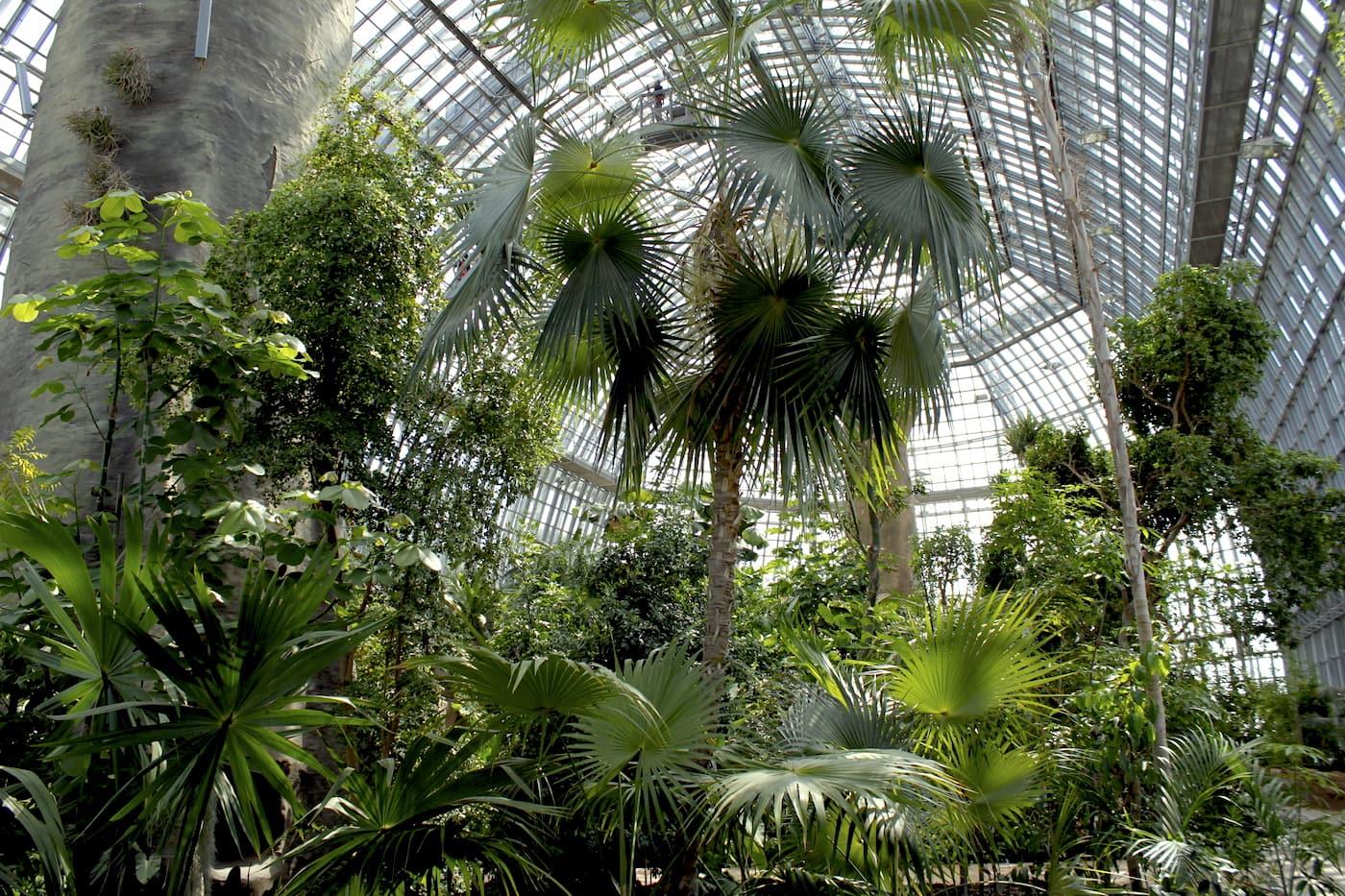 Tropenhaus im Botanischen Garten Berlin // HIMBEER