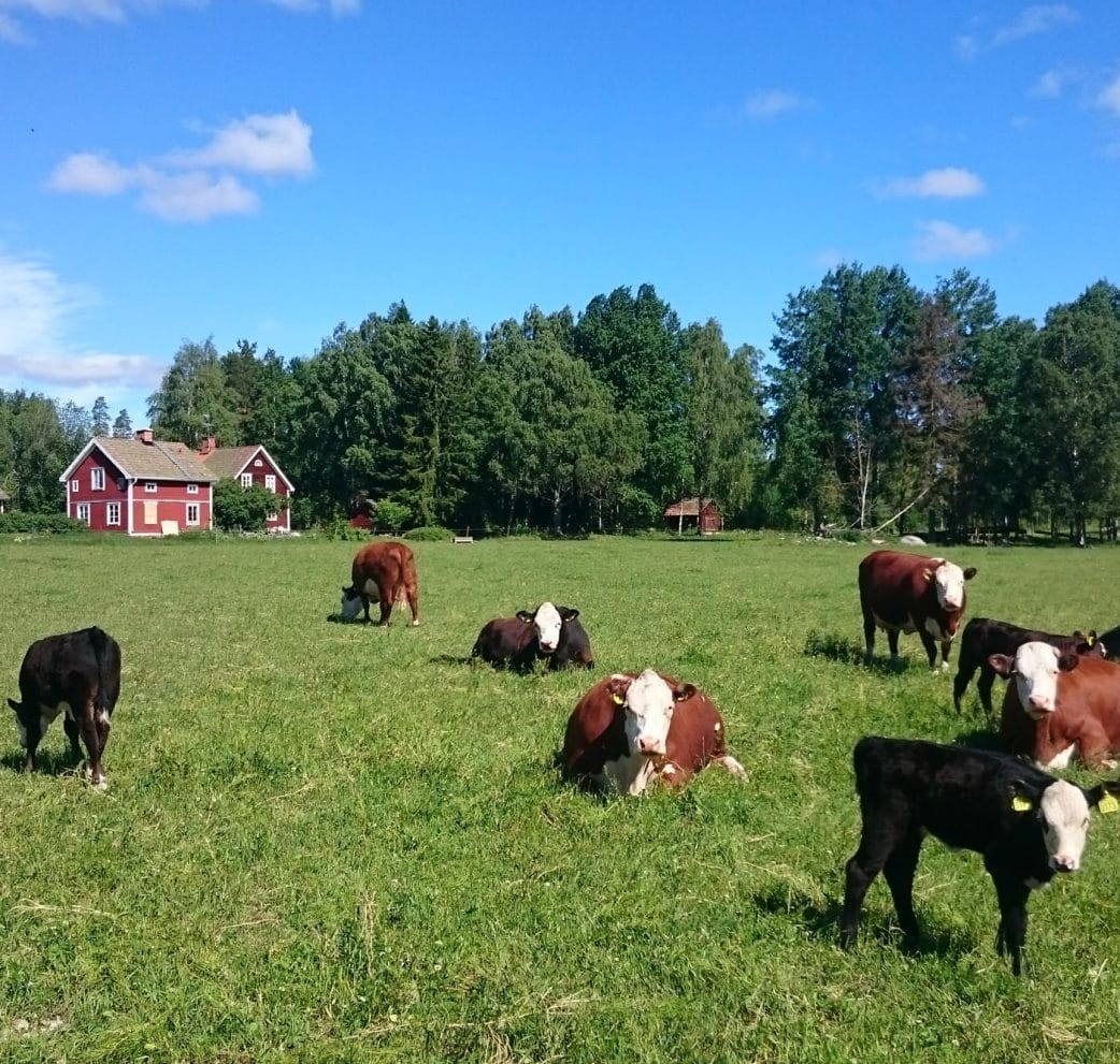 Urlaub mit Kindern in Schweden auf dem Bauernhof // HIMBEER