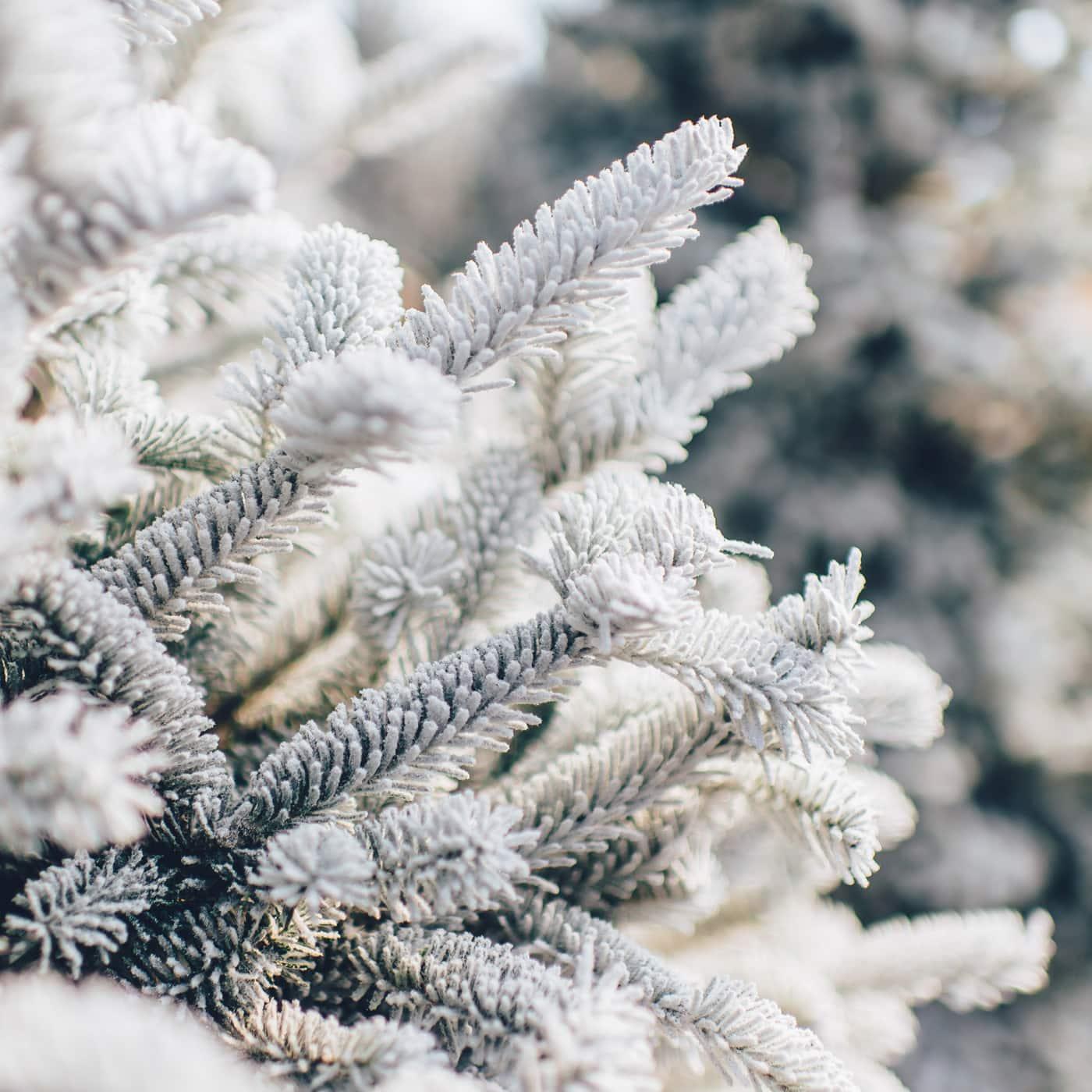 Winterspaziergang in der Adventszeit und an Weihnachten – Weihnachtsrituale mit Kindern // HIMBEER