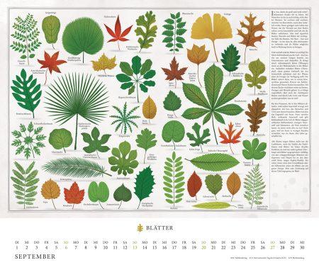 Schöne Kalender für Kinder und Familien 2020: Bäume von Piotr Socha // HIMBEER