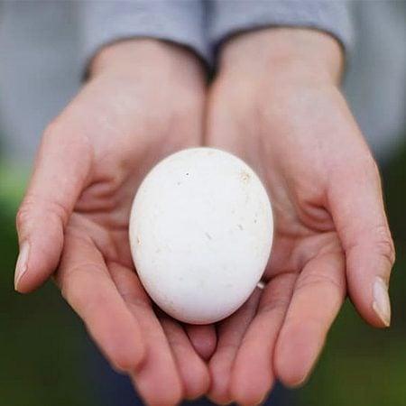 Eier frisch gelegt – Familienurlaub auf dem Bauernhof an der Algarve // HIMBEER