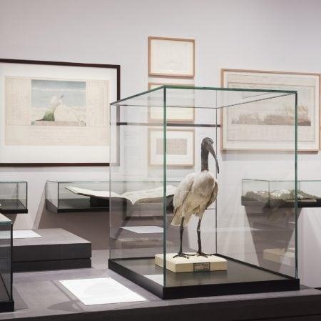 Wilhelm und Alexander von Humboldt – Ausstellung im Deutschen Historischen Museum für Familien mit Kindern // HIMBEER